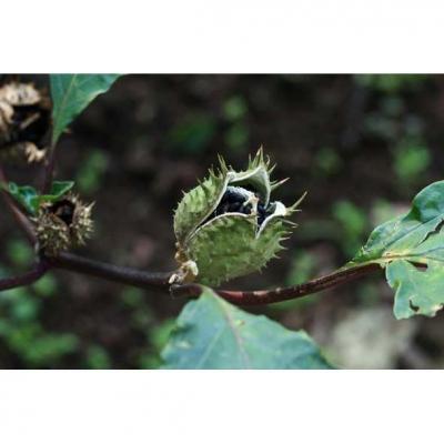 Toray-Weltneuheiten zur ispo 2012: Erste hybride Funktionstextilien basierend auf Biomasse bereit fr die Saison 2013/14